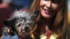 Scamp the Tramp crowned the world's ugliest dog