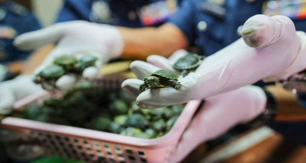 More than 5,000 turtles seized in luggage at Malaysia airport