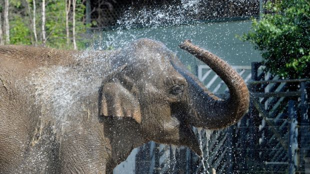 An elephant cools off during the warm weather at Dublin Zoo on Thursday. Photograph: Alan Betson/The Irish Times.