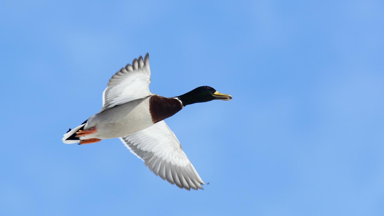 Irish bird population in 'dramatic' decline, Oireachtas committee to hear