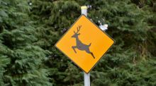 Caution: garden eating deers about. Photograph: Alan Betson ,