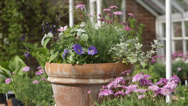 Summer bedding plants in a pot. Photograph: Richard Johnston