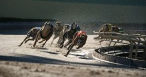 Barry's Tea and FBD Insurance have pulled their sponsorship of greyhound racing in the aftermath of an RTÉ programme on the industry. Image: iStock.