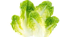 Lettuce doesn't have to be eaten in a salad, it can be braised, grilled, stir-fried, used as a wrap, and juiced. Photograph: iStock