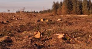 'In the current situation forestry will not only be failing to mitigate against climate change, it may be making it worse.' Photograph: iStock