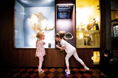 MUSEUM: Sophia O'Brien (5) and Cora Gleason (6) enjoy a visit to the Cabinet of Wonders at the Natural History Museum in Dublin. Photograph: Tom Honan for The Irish Times.