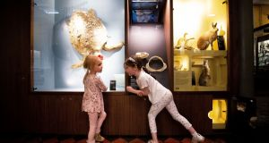 Sophia O'Brien (5) and Cora Gleason (6) at the Natural History Museum, Merrion Street, Dublin 2. Photograph: Tom Honan/The Irish Times