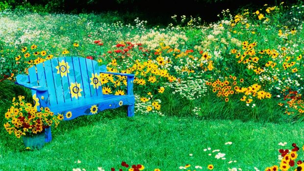 Leave the lawn mower in the shed and let your garden grow. Photograph: Getty