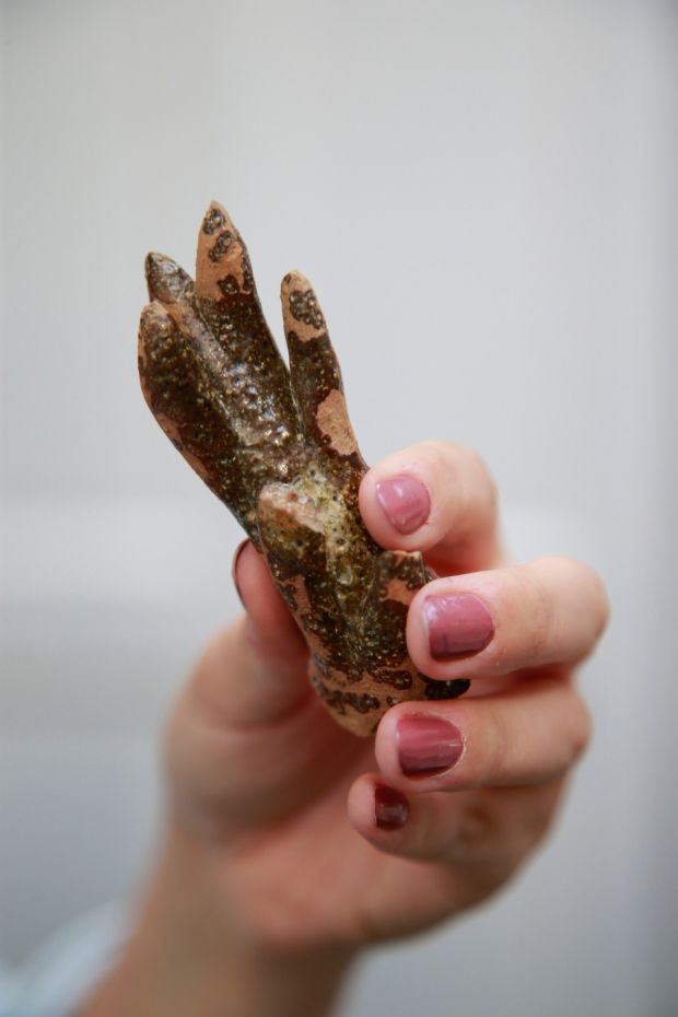 "A piece of pottery shaped like an antler which was found at the Norman settlement. It was part of a type of animal-shaped jug used for special ceremonies called an ""aquamanile"". Photograph Nick Bradshaw"