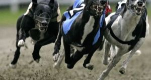 The greyhound board has promised to reform the industry which receives €16 million in State support every year.