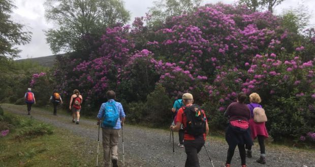 There is little doubt the Rhododendron Walking Festival is here to stay.