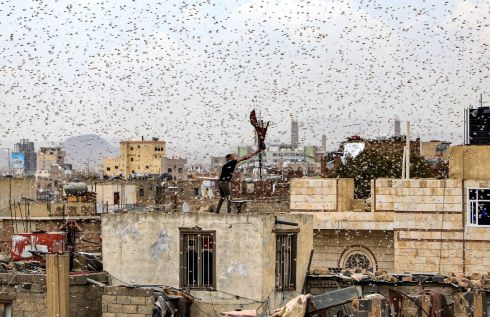 A man tries to catch locusts while standing on a rooftop as they swarm over the Huthi rebel-held Yemeni capital Sana'a. Photograph: Mohammed Huwais/AFP/Getty Images
