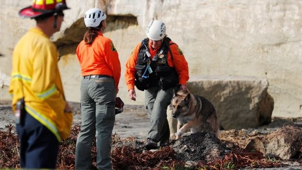 A dog searches the area around the cliff collapse. Photograph: Mike Blake/Reuters