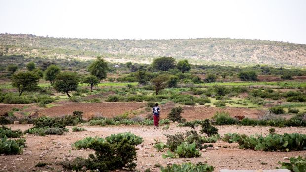 A farmer walks out to his field in Carracad, Somaliland. Photograph: Gavin Douglas/ Concern Worldwide