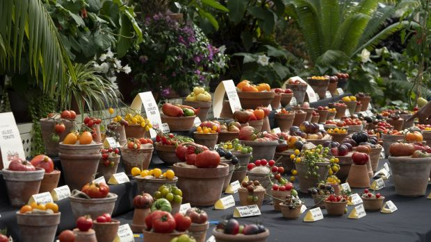 Totally Terrific Tomato Festival at the National Botanic Gardens, Dublin. Photograph: Jonathan Hession