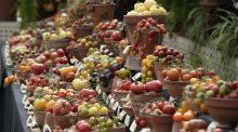The spectacular display of produce at the Totally Terrific Tomato Festival at the National Botanic Gardens, Dublin. Photograph: Jonathan Hession