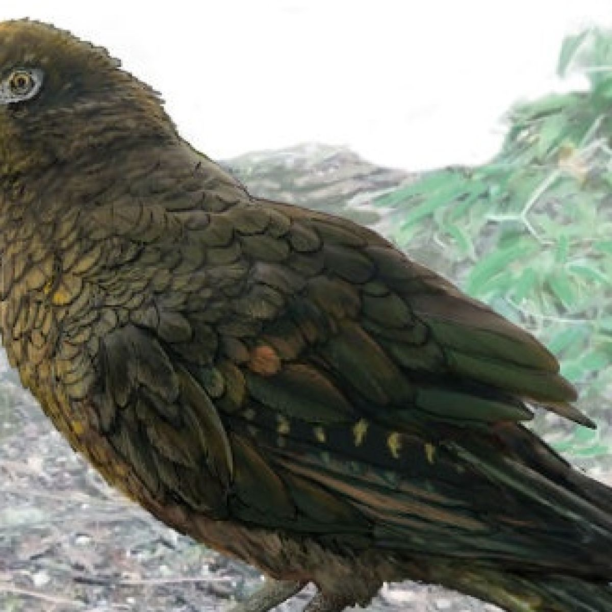 Fossil Of World S Largest Parrot Discovered In New Zealand