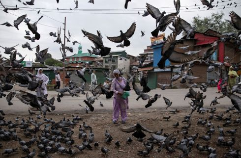 FOOD FIGHT: A Kashmiri woman feeds pigeons on the street in Srinagar after the scrapping of the region's special constitutional status by the Indian government. Photograph: Danish Siddiqui/Reuters