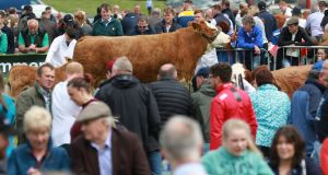 The Tullamore Show & FBD National Livestock Show . Photograph Nick Bradshaw
