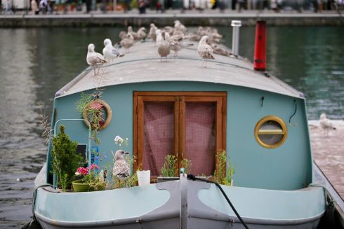 CANAL VIEW: Gull's enjoing the view from a barge on Charlotte Quay, Dublin.  Photograph: Nick Bradshaw/The Irish Times