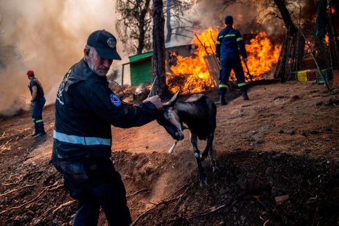 BY THE HORNS: A volunteer tries to save a goat during a forest fire in the village of Makrimalli on the island of Evia, northeast of Athens. Hundreds of villagers were evacuated on August 13th and the Greek prime minister cancelled a vacation as scores of firefighters battled a major wildfire on the country's second-largest island of Evia, authorities said. Photograph: Angelos Tzortzinis/AFP/Getty