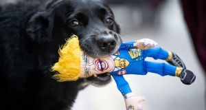 GAG THE DOG: Alfie is pictured with a Donald Trump doll in his mouth. Photograph: Tom Honan/The Irish Times