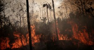A burning tract of Amazon jungle is seen as it is being cleared by loggers and farmers in Porto Velho, Brazil . Photograph: Ueslei Marcelino/Reuters