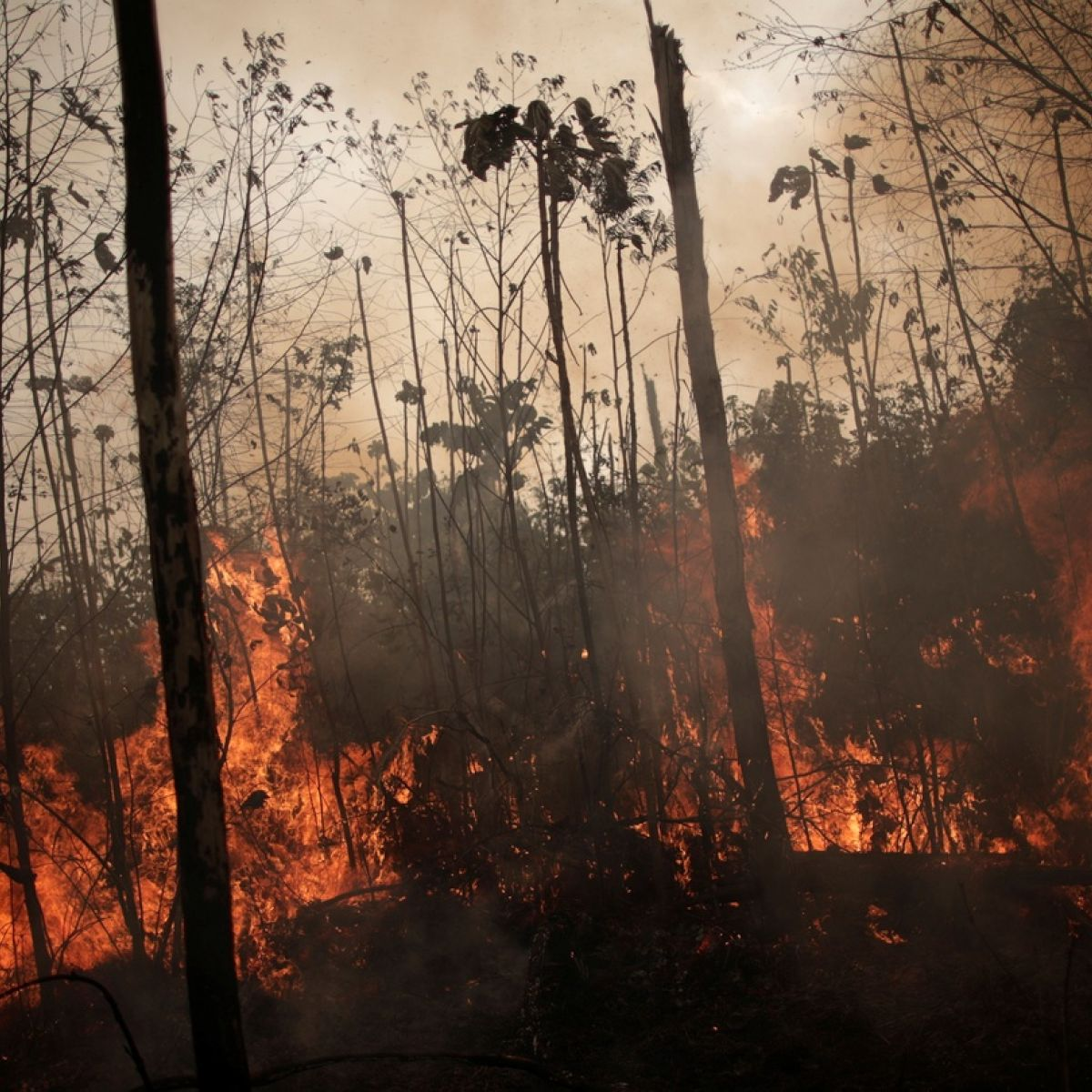 6deb3e99abaae Amazon fires: Brazilian states ask for military help amid record blazes