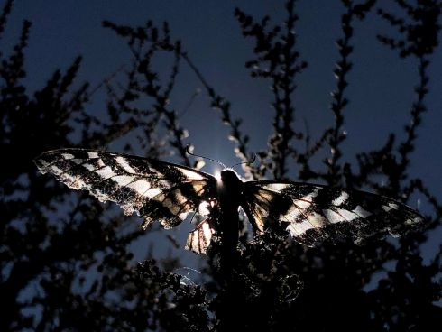 WINGS: A butterfly sits on a tree in Los Angeles, California. Photograph: Lucy Nicholson/Reuters
