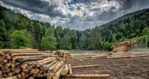 It's hard not to feel sympathy for the 12,400 or so investors in  Irish Forestry Funds who have received substantially less than they had expected. Photograph: iStock
