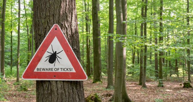 Lyme-bearing ticks can be found on deer, sheep, cats, dogs, squirrels and mice. Photograph: iStock
