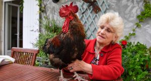 Corinne Fesseau poses with her rooster Maurice in her garden at Saint-Pierre-d'Oleron in La Rochelle, western France. File photograph: Xavier Leoty/AFP/Getty Images