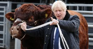 Britain's prime minister Boris Johnson with a bull during a visit to Darnford Farm near Aberdeen, Scotland. Photograph: Andrew MilliganAFP/Getty