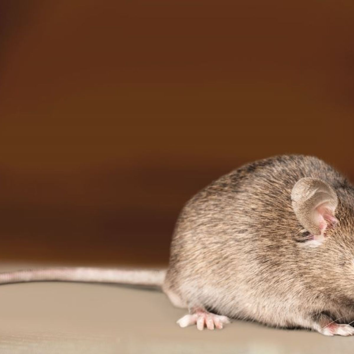Dublin 4 restaurant closed after live mouse found in kitchen