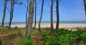 The unusual combination of pine woods, sand-dunes and beach at Raven Point. Photograph: Zoe Devlin