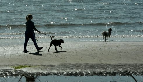 WILL YEZ HURRY UP? A dog walker on the beach at Rush, Co Dublin, enjoying the warm weather with her charges. Photograph: Alan Betson