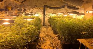 A total of 117 mature plants were seized in a converted garage unit. Photograph: Garda Síochána/Facebook
