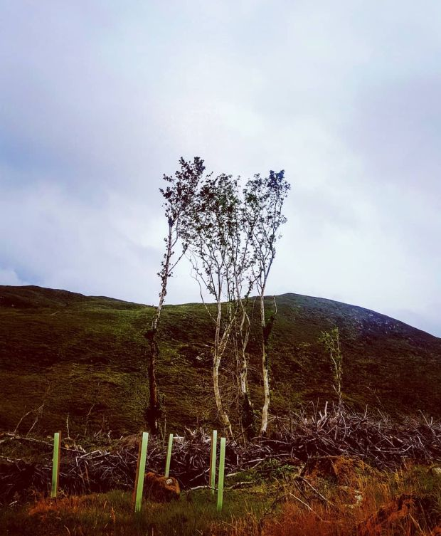 A tree in Donegal