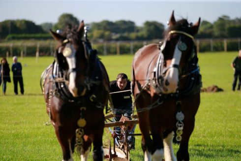 Dean Hall in action on the horse-drawn plough during the morning's U40 category in Horse Ploughing. Photograph: Nick Bradshaw