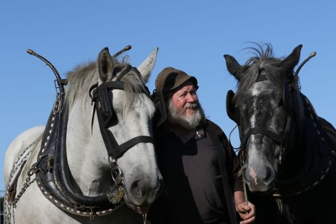 Jerry Wheels, from Tralee in Co Kerry, with horses Larry and Elton, preparing for the Horse Ploughing.  Photograph: Nick Bradshaw