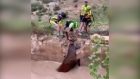 Stuck in a rut: Spanish cyclists rescue trapped deer