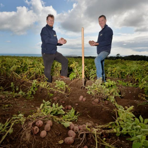 The Clintons have been farming potatoes in Skerries, Co Dublin, since the 1700s. Photograph: Alan Betson