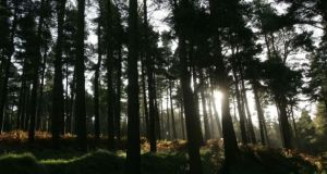 At 11 per cent (770,000 hectares), Ireland has one of the lowest levels of forest cover in Europe. Photograph: Alan Betson