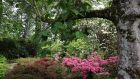 Mount Congreve  garden  boasts  3,000 different trees and shrubs, more than 2,000 rhododendrons, 600 camellias, 300 acers, 600 conifers, 250 climbers and 1,500 herbaceous plants