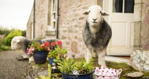 "Anyone for tea with ""naughty sheep"" of Loch Lomond? Photograph: AirBnB"