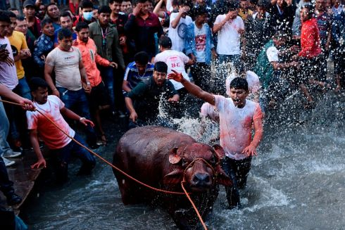 NEPAL SACRIFICE: Nepalese men watch as devotees splash water on a buffalo set to be sacrificed on the ninth day of the Hindu Dashain Festival, in Bhaktapur, on the outskirts of Kathmandu. The festival celebrates the triumph of good over evil. Photograph: Prakash Mathema/AFP/Getty