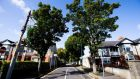 "Lime trees on St Canice's Road in Dublin,  planted in the early 1930s, are among the ""largest in the Irish landscape"", Dublin City Council  said,	and line ""very narrow footpaths with inadequate rooting capacity and beneath overhead services"". Photograph:  Tom Honan"