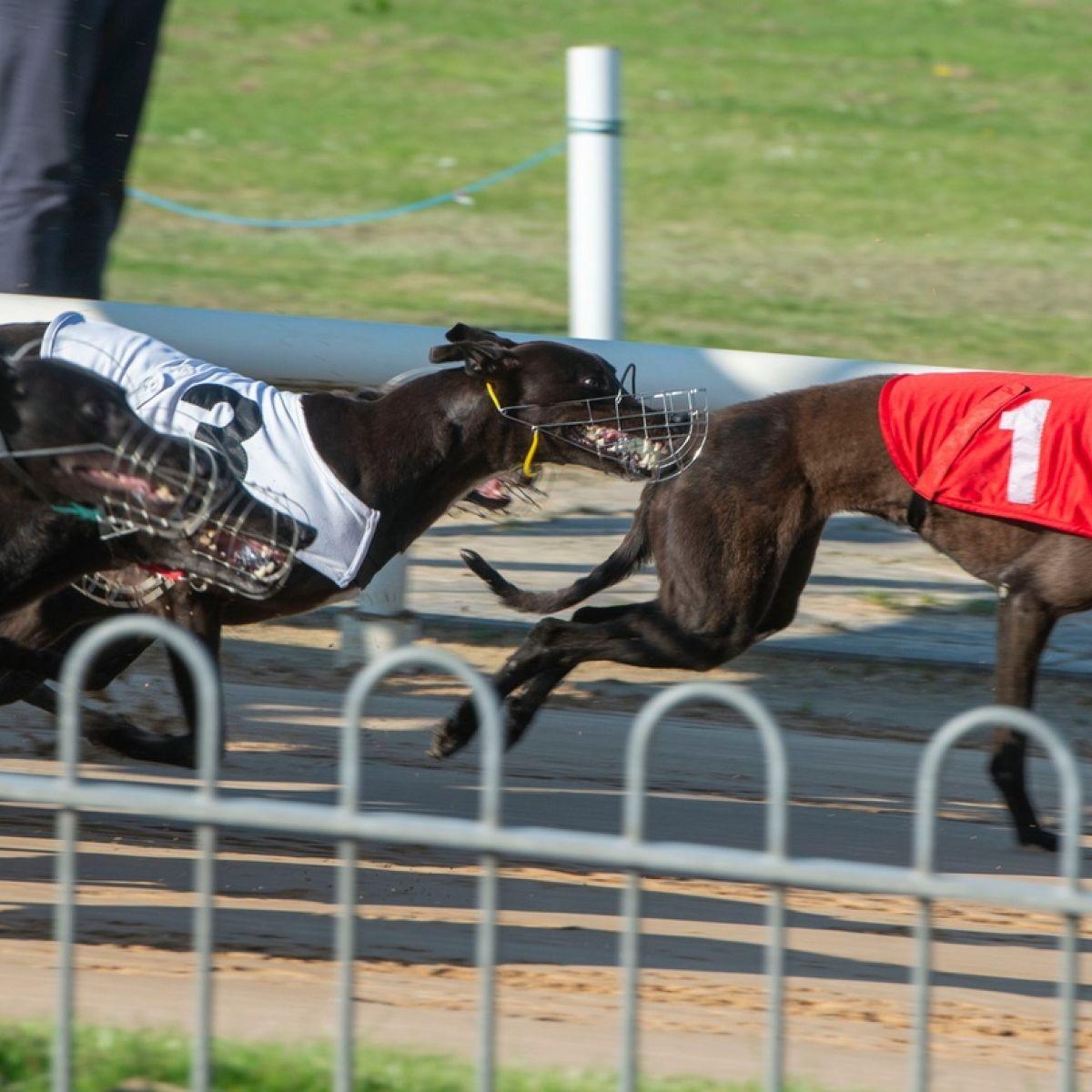 harolds cross dog racing betting
