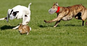 Josepha Madigan held out the 'possibility of limited licensing' for this coursing season. Photograph: Julien Behal/PA Wire