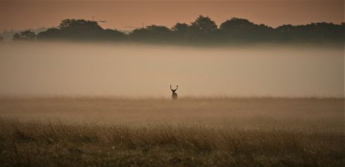 LONE FIGURE: A stag in the Phoenix park taken in the dawn mist. Phtotgraph: Jimmy Freeley